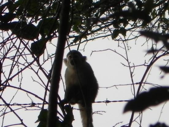 La Marly Enero 2012 155